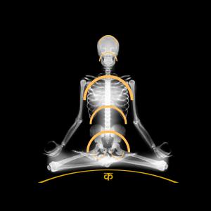 Yoga Foundations: Spirals, Arches and Yoga Asana - Karmuka Yoga
