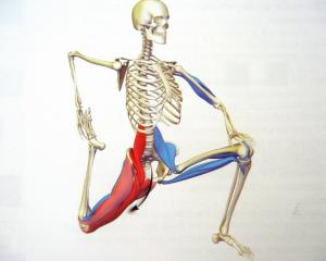 La fuente de la juventud: La pelvis y la columna vertebral - Karmuka Yoga