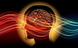El cerebro izquierdo y derecho: Dharana, Dhyana y Samahdi - Karmuka Yoga
